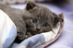 Gatinho pequeno bonito Imagens de Stock