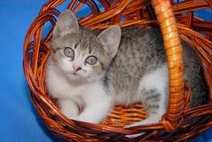 Gatinho pequeno bonito que descansa na cesta de vime Fotos de Stock Royalty Free