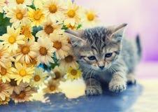 Gatinho pequeno com flores Foto de Stock Royalty Free