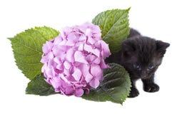 Gatinho pequeno com uma curva e as flores Imagem de Stock Royalty Free