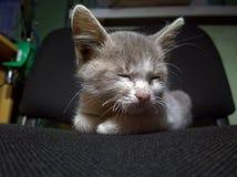 Gatinho pequeno do sono Foto de Stock Royalty Free
