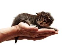 Gatinho pequeno em uma mão Imagem de Stock Royalty Free