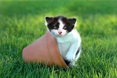 Gatinho pequeno fora na luz natural Fotografia de Stock