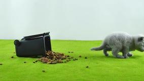 Gatinho pequeno que come do brinquedo do escaninho de lixo filme