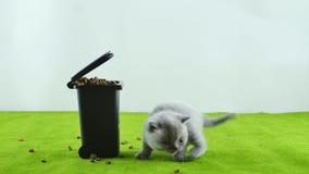 Gatinho pequeno que come do brinquedo do escaninho de lixo vídeos de arquivo