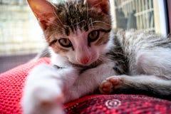 Gatinho pequeno que encontra-se em uma coberta O gato pequeno dorme docemente como uma cama pequena Gato do sono foto de stock