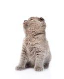 Gatinho pequeno que olha acima No fundo branco Fotos de Stock Royalty Free