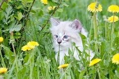 Gatinho pequeno que senta-se nas flores Fotografia de Stock
