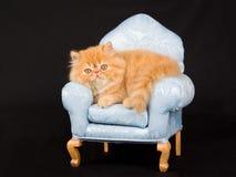 Gatinho persa consideravelmente bonito na mini cadeira imagens de stock royalty free