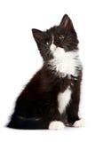 Gatinho preto e branco Imagem de Stock Royalty Free