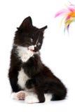 Gatinho preto e branco Foto de Stock Royalty Free