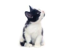 gatinho preto e branco, gato Imagens de Stock Royalty Free