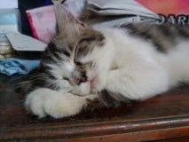 gatinho preto e branco que dorme na tabela de madeira imagens de stock royalty free