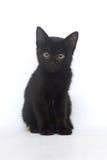 Gatinho preto em um fundo branco, isolado Imagens de Stock