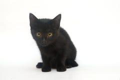 Gatinho preto em um fundo branco, isolado Foto de Stock Royalty Free