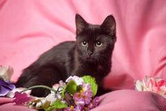 Gatinho preto no fundo cor-de-rosa Imagens de Stock Royalty Free