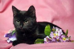 Gatinho preto no fundo cor-de-rosa Fotografia de Stock
