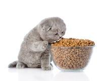 Gatinho que come o alimento de uma grande bacia Isolado no fundo branco Fotografia de Stock