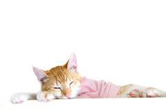 Gatinho que dorme em um fundo branco Imagens de Stock Royalty Free