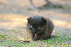 gatinho que encontra-se no sol Imagem de Stock