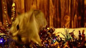 Gatinho que joga com decorações do Natal video estoque