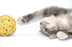 Gatinho que joga com esfera Fotografia de Stock Royalty Free