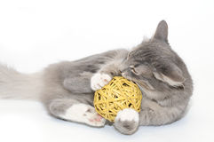 Gatinho que joga com esfera Imagem de Stock
