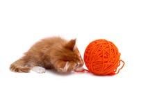 Gatinho que joga com a esfera das lãs Fotografia de Stock Royalty Free