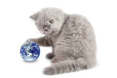 Gatinho que joga com o planeta da terra isolado Imagens de Stock