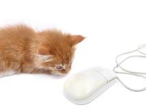 Gatinho que joga com rato do computador Foto de Stock