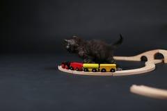 Gatinho que joga com um trem de madeira Foto de Stock Royalty Free