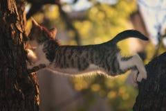 Gatinho que joga na árvore Fotos de Stock Royalty Free