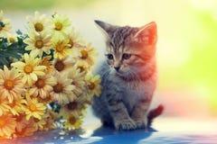 Gatinho que olha o ramalhete de flores da margarida Imagens de Stock