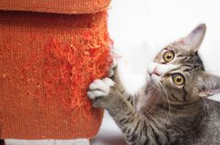 Gatinho que risca o sofá da tela Foto de Stock Royalty Free