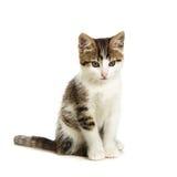 Gatinho que senta-se em um fundo branco Foto de Stock