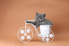 Gatinho que senta-se em um potenciômetro de flor da bicicleta Fotos de Stock