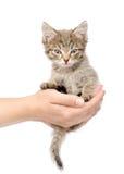 Gatinho que senta-se em uma palma Isolado no fundo branco Foto de Stock