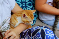 Gatinho recém-nascido no girl& x27; mão de s Gato recém-nascido do bebê Vaquinha vermelha nas mãos de inquietação Foto bonito do  Fotografia de Stock Royalty Free