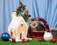 Gatinho siberian bonito Foto de Stock Royalty Free