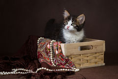 Gatinho siberian macio bonito em uma cesta no fundo marrom Retrato Foto de Stock