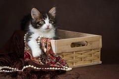 Gatinho siberian macio bonito em uma cesta no fundo marrom Retrato Imagem de Stock Royalty Free
