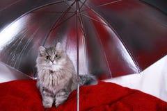 gatinho sob o guarda-chuva Fotografia de Stock