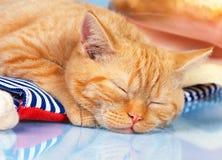 Gatinho vermelho bonito do sono Fotos de Stock Royalty Free