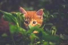 Gatinho vermelho bonito na grama Imagens de Stock