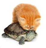 Gatinho vermelho com tartaruga de mar foto de stock royalty free