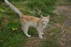 Gatinho vermelho pequeno que está na grama verde fotos de stock