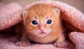 Gatinho vermelho recém-nascido Imagens de Stock