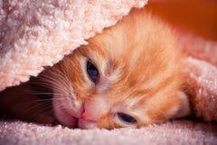 Gatinho vermelho recém-nascido Imagens de Stock Royalty Free