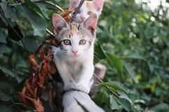gatinhos Foto de Stock Royalty Free