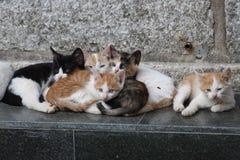 Gatinhos Imagem de Stock